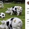 Реал (Мадрид) търси вариант, чрез който да съди Христо Стоичков