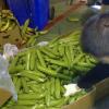 В Испания задържаха 900 кг наркотици в банани