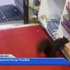Хранителен магазин се жалва в полицията срещу група катерички, които им крадяли ежедневно от шоколадовите десерти (видео)