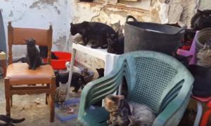 Благотворителните организации в Испания спешно търси дом за 110 котки, след като те и собственикът им бяха изгонени от апартамент в района на Валенсия